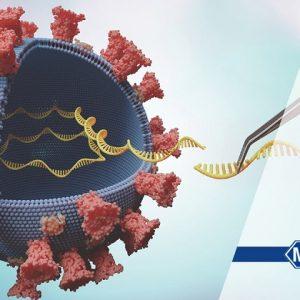 Вирусная ДНК и РНК